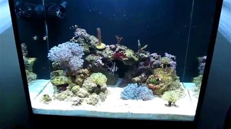 My Nano Reef 60 Litre(19gallon) Second Month Youtube