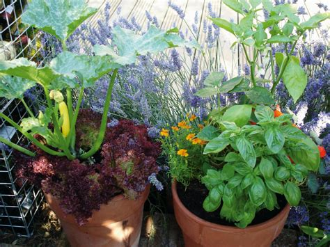 growing vegetables in containers growing vegetables in containers diy