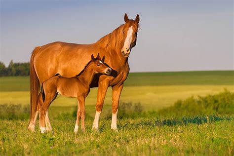 Horses American Paint Horse