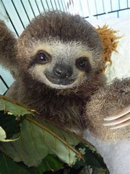 best cute sloth ideas and images on bing find what you ll love