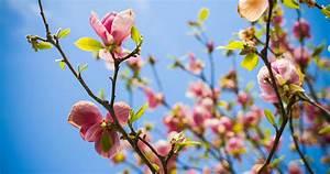 Rosa Blühender Baum Im Frühling : fr hling in new york die 36 besten events insider tipps ~ Lizthompson.info Haus und Dekorationen