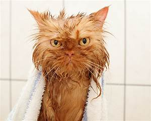 Cats La : meet garfi the angriest cat on the internet huffpost ~ Orissabook.com Haus und Dekorationen