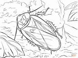 Coloring Cave Cockroach Pages Bat Drawing Printable Bear Adult Dot Coloringbay Paper Getdrawings Categories sketch template