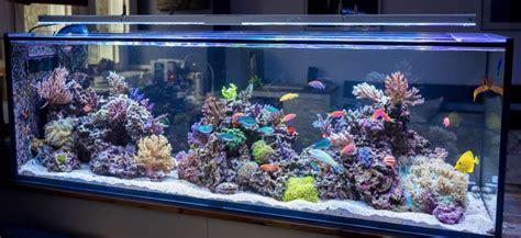 Kaya Kayu Painting Kit морской аквариум с чего начать видео