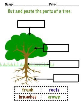 trees a tree mendous action packed unit about trees science literacy math action