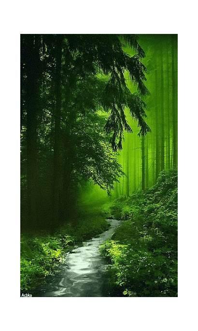 Nature Forest Natur Hermosos Places Gift Paisaje