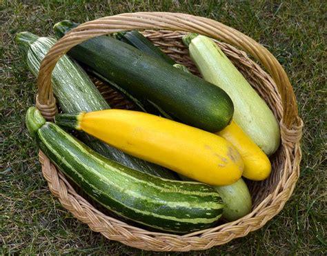 courgette cuisine les courgettes un légume délicieux à découvrir ou à écouvrir ma cuisine santé