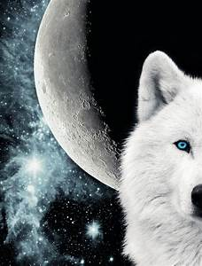 Risultati immagini per white wolf howling at the moon ...