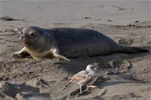 Estuary Animals - Estuary Biomes