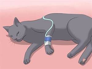 How To Diagnose Kidney Failure In Cats  With Pictures