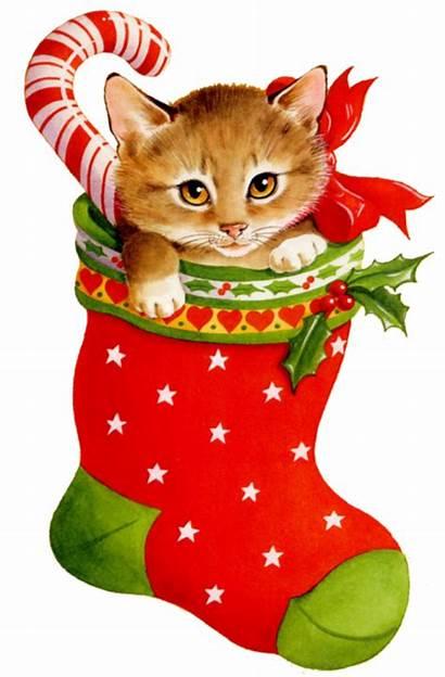 Clipart Ruth Chat Transparent Clip Cat Chaussette