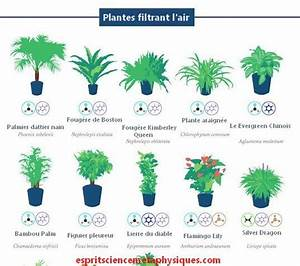 Plante Detoxifiante : petite plante verte d int rieur photos de magnolisafleur ~ Melissatoandfro.com Idées de Décoration