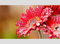 40 BEAUTIFUL FLOWER WALLPAPERS FREE TO DOWNLOAD