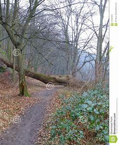 Large Uprooted Tree Blocking A Forest Path Stock Image ...