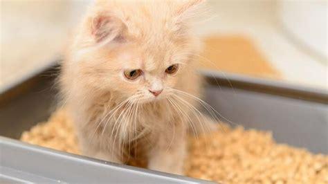 durchfall bei der katze tiergesundde