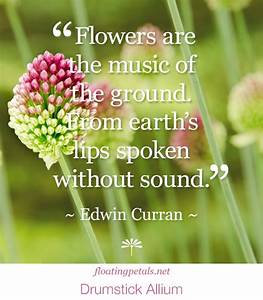 26 Flower Quotes – Life Quotes & Humor