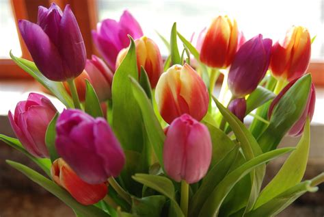 different types of flowers different types of flowers with pictures beautiful flowers