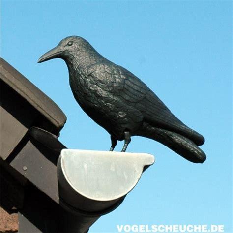 Systeme Zur Vogelabwehr Am Haus by Vogelscheuchen Tierattrappe Rabe Stehend Vogelabwehr