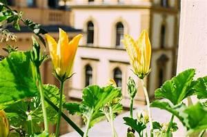 Hortensien Schneiden Verblüht : schnittblumen kaufen regional nachhaltig und fair ~ Frokenaadalensverden.com Haus und Dekorationen
