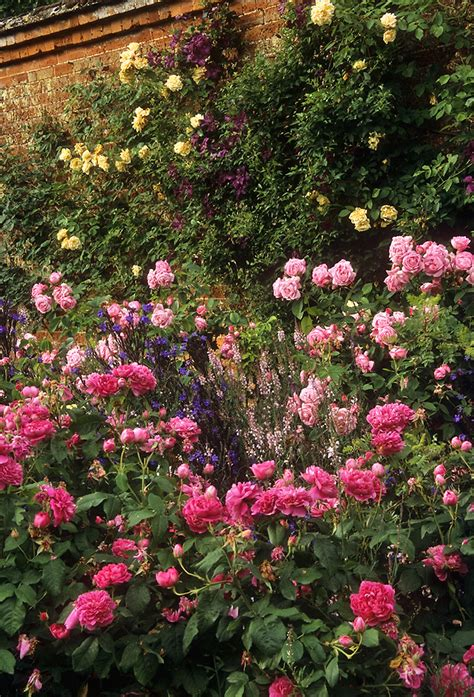 mottisfont abbey rose garden hampshire england  outs