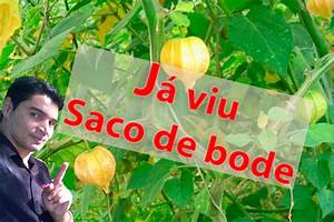 Saco De Bode Voc U00ea J U00e1 Viu Est U00e1 Planta Ou Flor  Cada Coisa