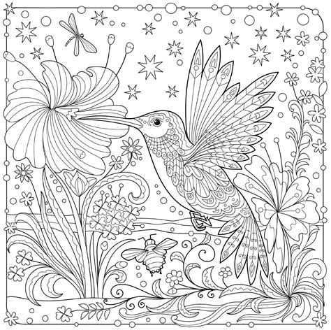 hummingbird colouring page animal coloring pages