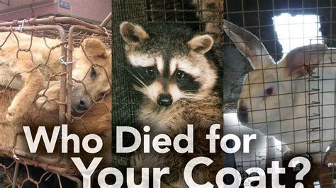 Stop Wearing Fur NOW Animals Animal facts