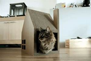 Chat, Modern, House, Successfully, Replaced, Cardboard, Cat, Tree
