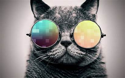 Cat Cool Wallpapers Windows Cats Glasses Background