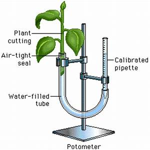 lab 9 transpiration example 2 ap