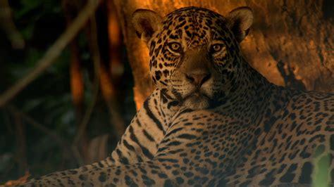 Big Cats And Wildlife Habitat Conservation