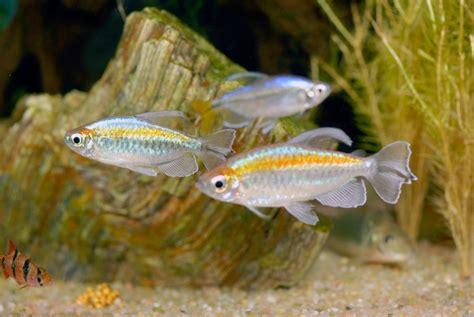 poisson aquarium eau douce vpc