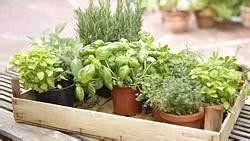 Herbes Aromatiques En Pot : herbes fraiches en pot fleur de passion ~ Premium-room.com Idées de Décoration