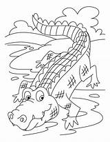 Crocodile Coloring Printable sketch template