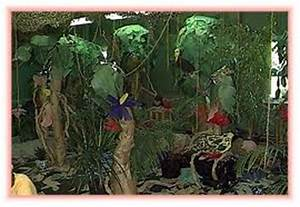 Rain Forest Layers Theme for Preschool