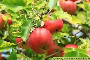 Wann Apfelbaum Pflanzen : apfelbaum pflege pflanzen d ngen schnitt ~ Lizthompson.info Haus und Dekorationen
