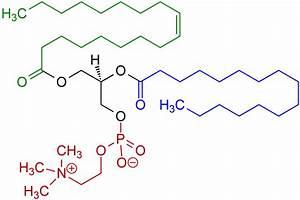 Phosphatidylcholine - Wikipedia  Phosphatidylcholine