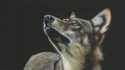 Wolf Drawing Dark Background Glance Monitor Ultrawide