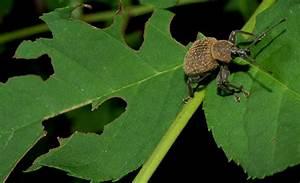 Insecte Qui Mange Le Bois : quel insecte mange les feuilles ~ Farleysfitness.com Idées de Décoration