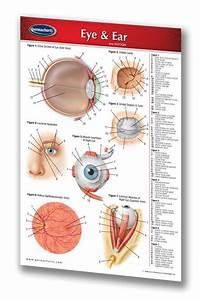 Eye  U0026 Ear