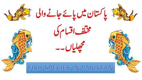 main fishes  pakistan youtube