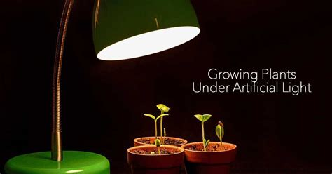 Artificial Light For Plants by Growing Plants Indoors With Artificial Light What You