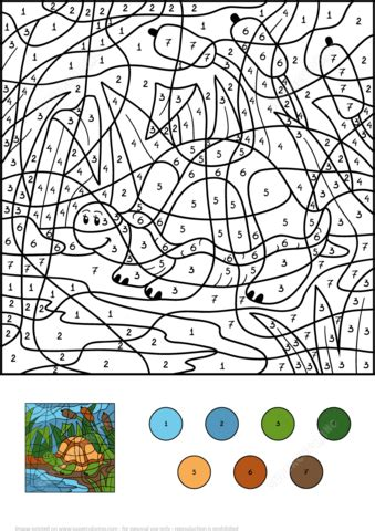 turtle  pond color  number  printable coloring pages