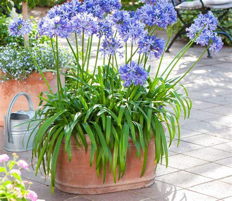 plantes de bureau sans soleil 5 jardinières longue durée détente jardin