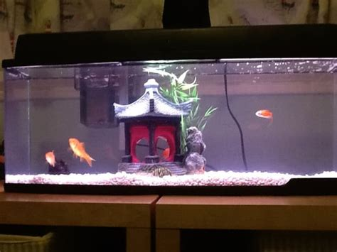 Petco Fish Aquarium Decorations by Fish Tank And D 233 Cor From Petco Yelp