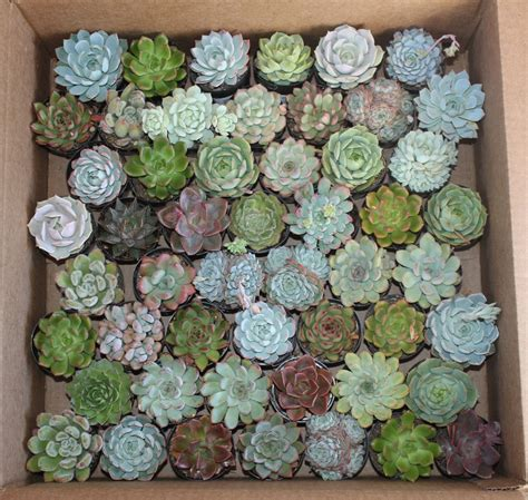 types  terrarium plants succulents  cacti masons