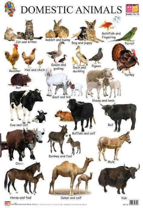 animais domesticos outros artigos escolares  de
