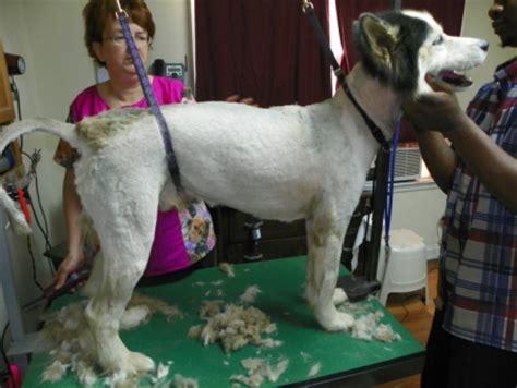 grooming smarter    shave  husky   bravura