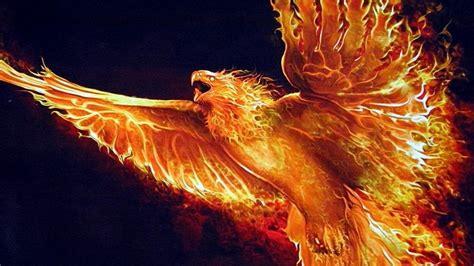 Fire phoenix wallpaper - backiee