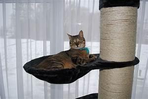 Arbre A Chat Solide : arbre chat tour ~ Mglfilm.com Idées de Décoration